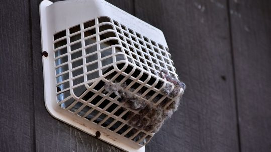 How To Remove and Prevent Birds From Getting in Dryer Vents