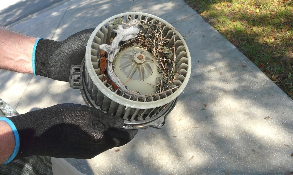 How To Get Rid of Pests Living in Your Ductwork